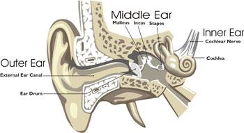 figure 1 diagram of human ear